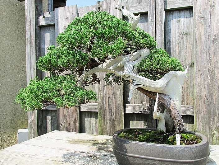 bonsai-in-schale